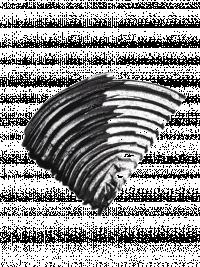 952409-unl-gb-176-rub-fanorama